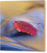 Maple Stream Wood Print