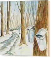Maple Trail Wood Print
