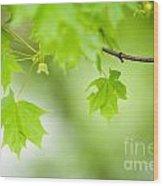 Maple Tree Wood Print