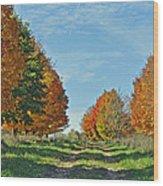 Maple Tree Lane Wood Print
