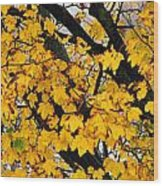 Maple Tree Panorama Wood Print