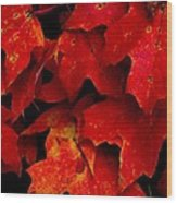 Maples Wood Print