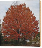 Maples In The Meadow Wood Print