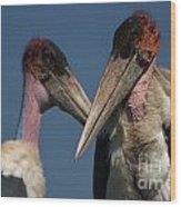 Marabou Storks Wood Print