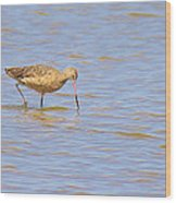 Marbled Godwit Searching For Food Wood Print