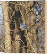 March Bluebird Wood Print