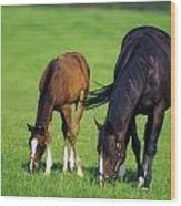 Mare And Foal Thoroughbred Horses Wood Print