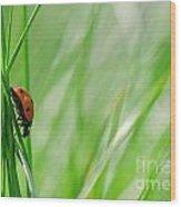 Ladybug In The Meadow Wood Print
