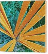 Marine Diatom Algae, Sem Wood Print