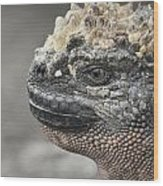Marine Iguana Amblyrhynchus Cristatus Wood Print