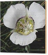 Mariposa Lily And Beetle Wood Print