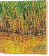 Marsh Colors  Wood Print