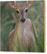 Marsh Deer Blastocerus Dichotomus Wood Print