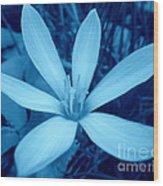 Marsh Grass Flower In Blue Wood Print