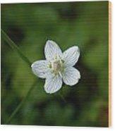 Marsh Grass-of-parnassus Wood Print