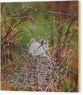 Marsh Spider Web Wood Print