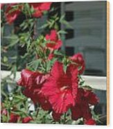 Martha's Vineyard Red Hibiscus And Porch Wood Print
