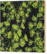 Martian Plants Against Black Wood Print