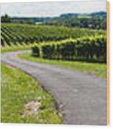 Maryland Vineyard Panorama Wood Print