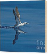 Masked Booby Wood Print
