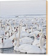 Massive Amount Of Swans In Winter Wood Print by Mait Juriado photo