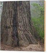 Massive Redwood And Fog Wood Print