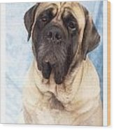 Mastiff 369 Wood Print