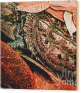 Mata Mata Turtle Wood Print