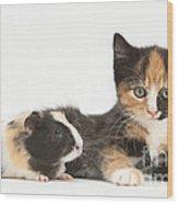 Matching Kitten & Guinea Pig Wood Print