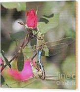 Mating Dragonfly Wood Print