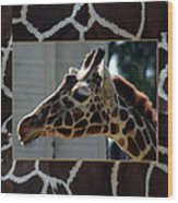 Matted Giraffe Wood Print