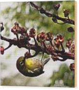 Maui Bird Wood Print