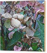 Mauve Hydrangea In Fall  Wood Print