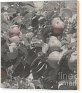 Mcintosh Apples In Partial Color Wood Print