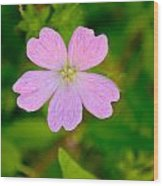 Meadow Checker Mallow Wood Print