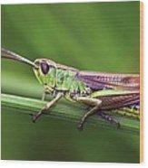 Meadow Grasshopper Wood Print