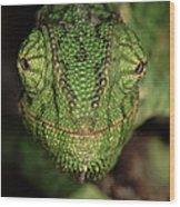 Mediterranean Chameleon Chamaeleo Wood Print