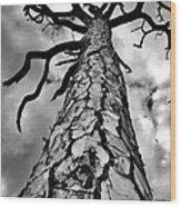 Medusa Pine Wood Print