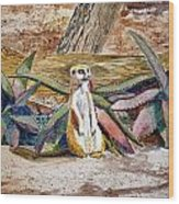 Meerkat And Aloe Wood Print