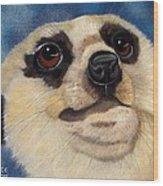 Meerkat Eyes Wood Print