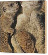 Meerkat Pups With Their Caretaker Wood Print