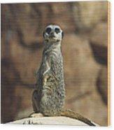 Meerkat Suricata Suricatta Sunning Wood Print by Konrad Wothe
