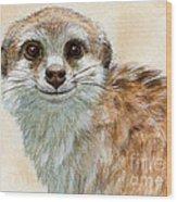 Meerkat 762 Wood Print