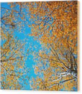 Meet In Heaven. Autumn Glory Wood Print by Jenny Rainbow