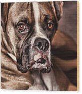Meet Rocky Wood Print by Deborah Benoit