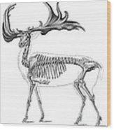 Megaloceros, Cenozoic Mammal Wood Print