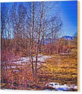 Melting Snow In South Platte Park Wood Print