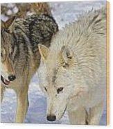 Members Of Wolf Pack Wood Print