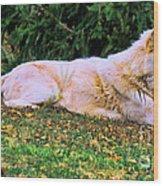 Menominie Park Grey Wolf Wood Print