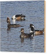 Mergansers After The Rain Wood Print